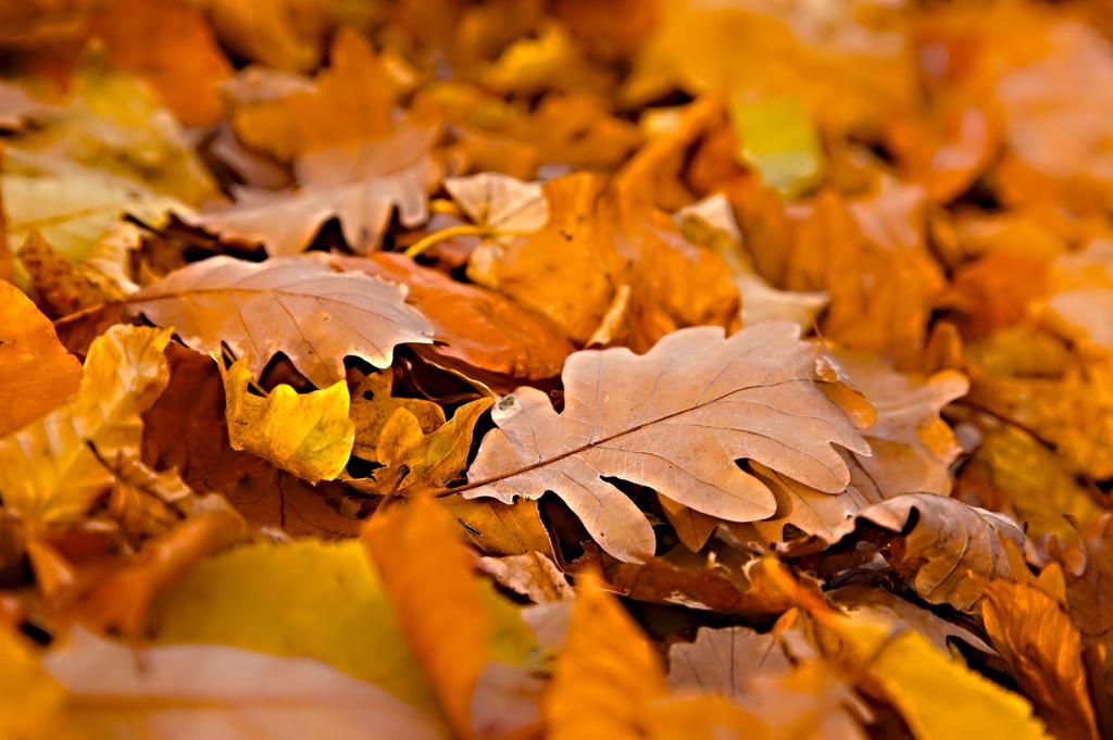 「秋バテ頭皮」ケアで、思いどおりの髪へ