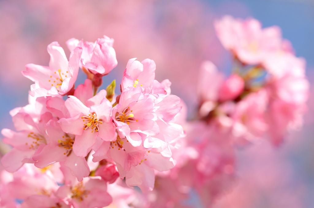 春から始める「紫外線攻略ケア」